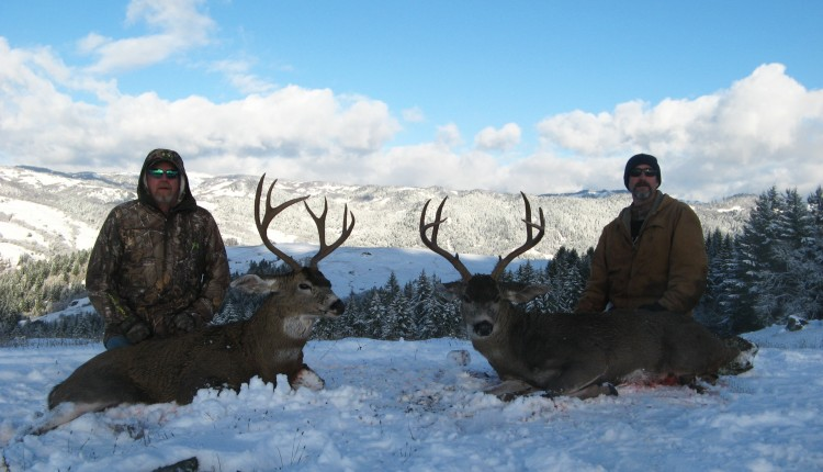 blacktail deer hunting outfitter